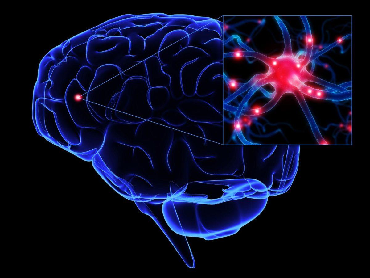 cerebroneuronio-1200x900.jpg