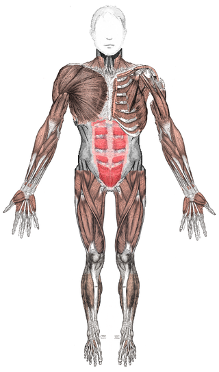 Esqueleto-humano.png
